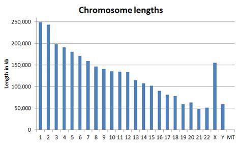 chromosome lengths
