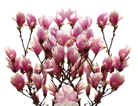 100 magnolia paint color best 25 kitchen colors ideas on kitchen paint