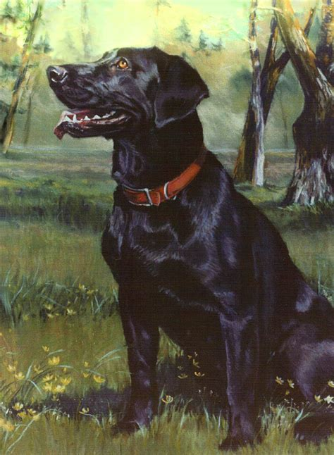 Labrador Retriever Artwork by Labrador Retriever By Jean Hildebrant