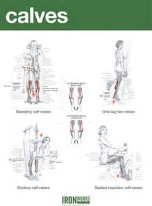 calf workouts at home blogarticlehamstrings and calves workout exles 40
