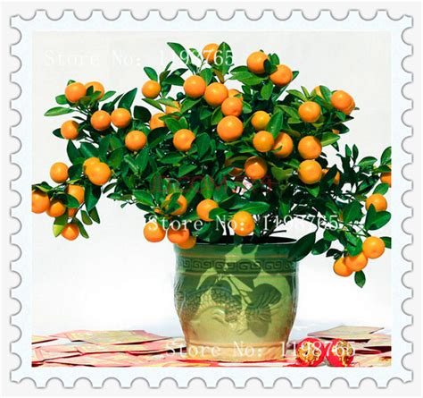 Min 100 Biji Benih Bunga Balsaminaimpatiensbalsacar Orange mini bonsai pohon promotion shop for promotional mini