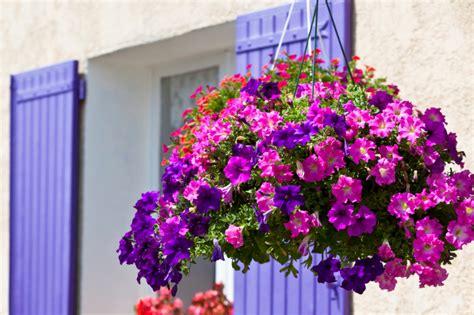 fiori da vaso balcone fiori da balcone consigli pratici per un balcone fiorito