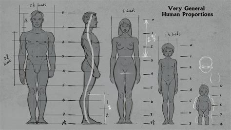 Human Anatomy Drawing Tutorial Nivoteamfo