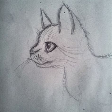 Sketches To Draw When Bored by Catdrawing Drawings On Paigeeworld Pictures Of