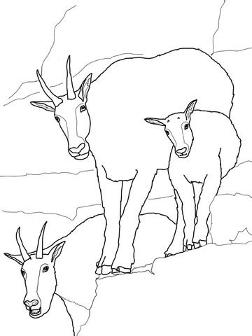 mountain goat baby  family coloring page