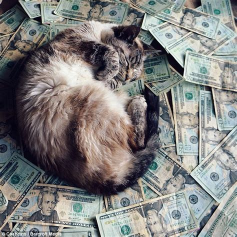 top sites top play kitty world s wealthiest cats pose on site featuring top one