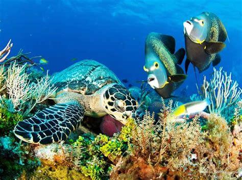 El Patio Santa Rosa Diving Dom Nozzi S Voyages And Adventures