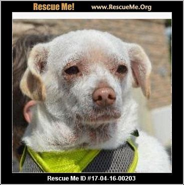 oklahoma dog rescue adoptions rescueme org