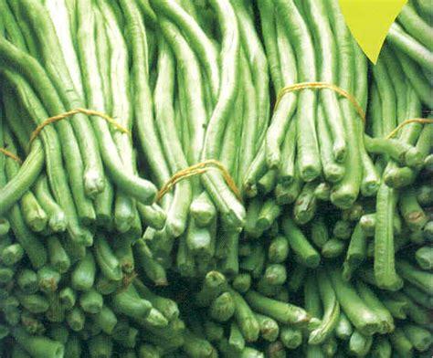 Benih Kacang Panjang Nasa budidaya kacang panjang teknis budidaya dengan teknologi