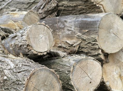 best splitting maul best splitting maul for firewood