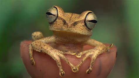 amazon rainforest animals 75 free hd animals backgrounds