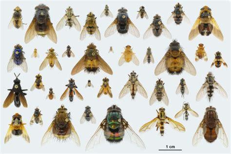 insetti volanti le 4 specie pi 249 pericolose di insetti volanti da conoscere