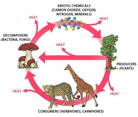 ecosystem diagram image gallery ecosystem diagram