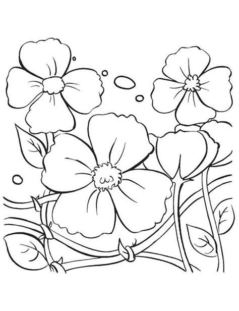 free poppy flowers coloring pages