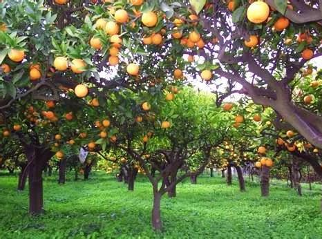 giardino delle arance arance