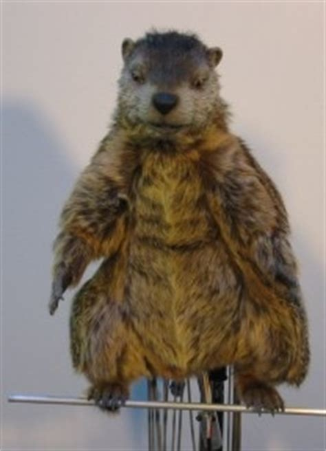 groundhog day lottery tcs pennsylvania lottery s quot gus the groundhog quot