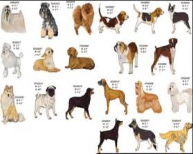 types of dogs my top collection dog breeds