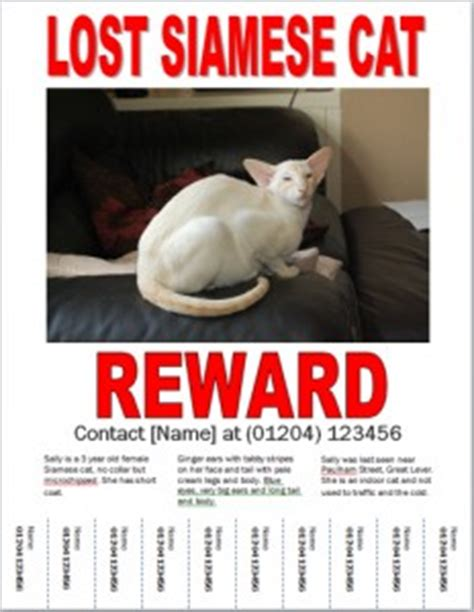Missing Cat Poster How To Make A Lost Cat Poster Lost Cat Poster Template Free