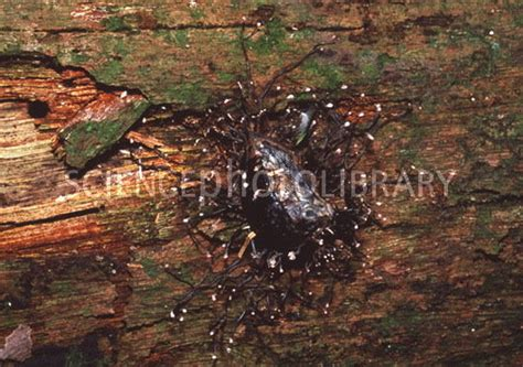 Saprophytic Feeders saprophytic fungus stock image b250 0966 science photo library