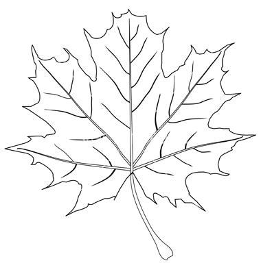 leaf outline clipartioncom
