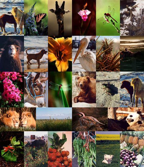 flora dan fauna indonesia pelajaran ipa mengenal persebaran flora dan fauna di