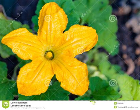 Floor Plan Helper by Squash Plant Bloom Stock Image Image 27450551