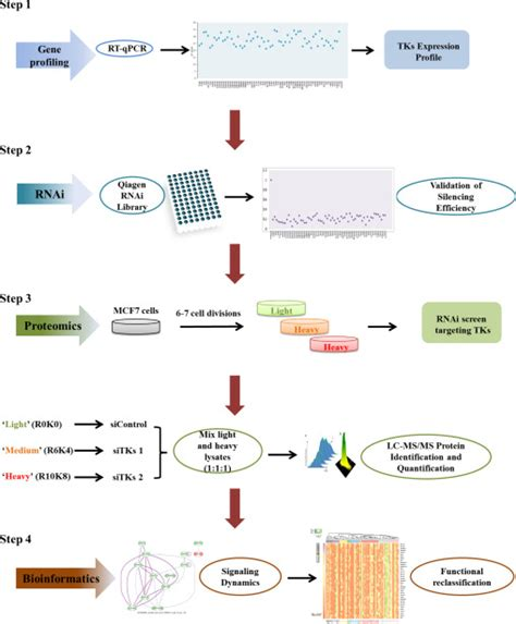 qpcr experimental design workflow of the experimental design firstly the gene