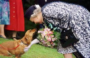 Queen Elizabeth Dogs no more corgis for the queen the washington post