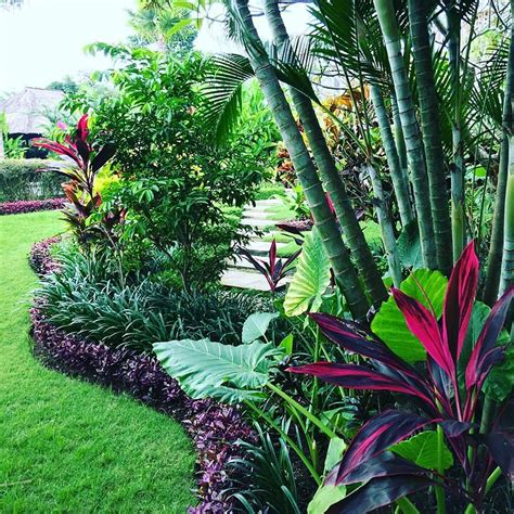 tropical trees for backyard 35 beautiful tropical front yard landscape ideas to make
