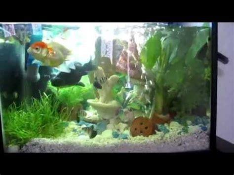 Lu Aquarium Ikan Hias ikan koy kura kura ikan hias dan aquarium