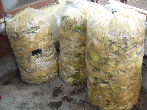 Ragi Untuk Fermentasi Jerami kambing membuat fermentasi dan pakan komplit untuk