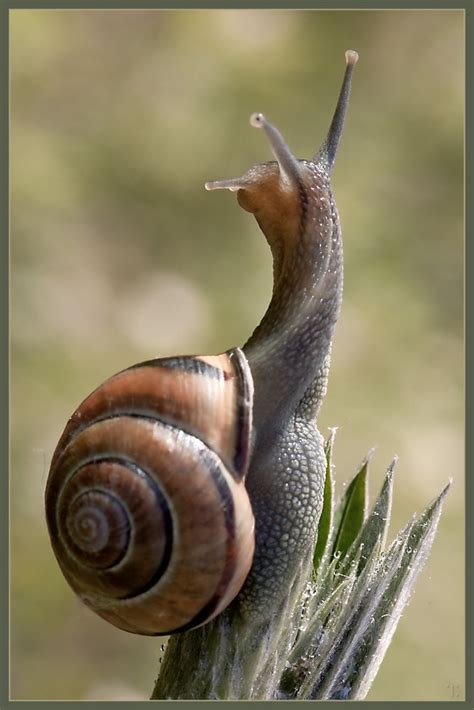 backyard snails best 20 garden snail ideas on pinterest snail snails