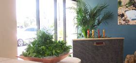 Interior Plantscapes Installation Maintenance And Management by The Potted Plant Indoor Plant Solutions And Maintenance