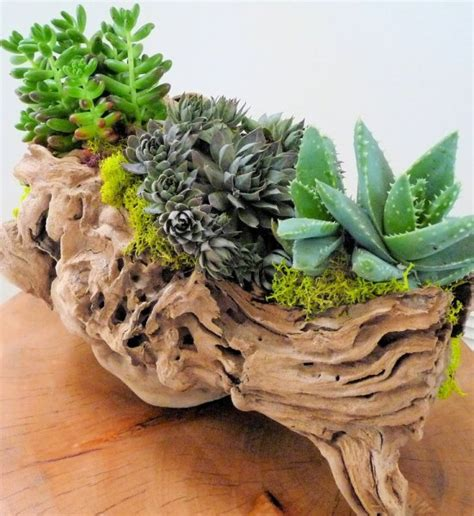 Where To Buy Inexpensive Home Decor Driftwood Decors With Plants Small Garden Ideas