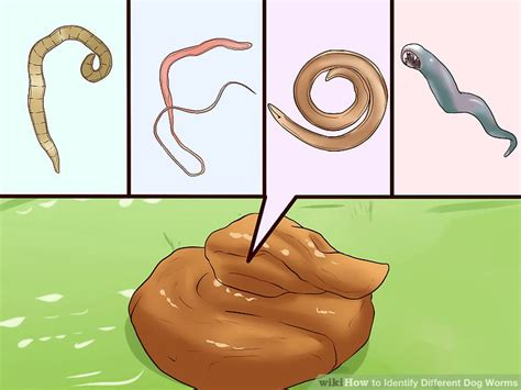 different types of worms in dogs how to identify different worms with pictures wikihow