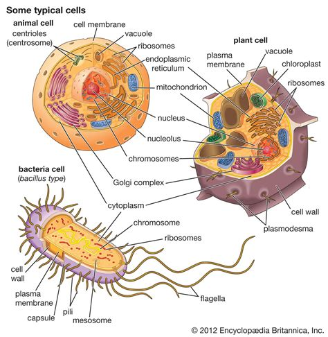 cell  computer plant animal cells plant cell