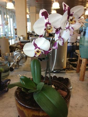 the olive room baltimore brunch at the olive room picture of the olive room baltimore tripadvisor