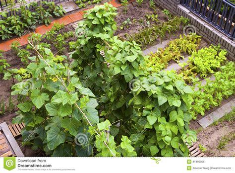 A Vegetable Garden Stock Photo Image 41493956 Big Vegetable Garden