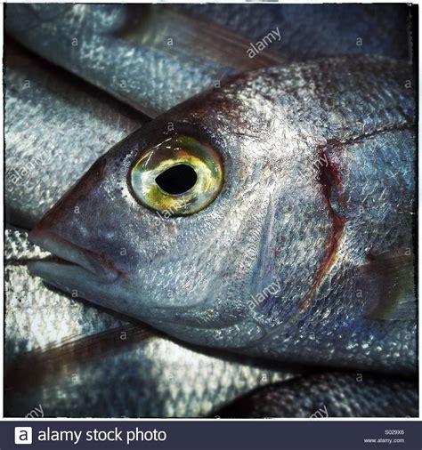 fish eye fish eye gallery