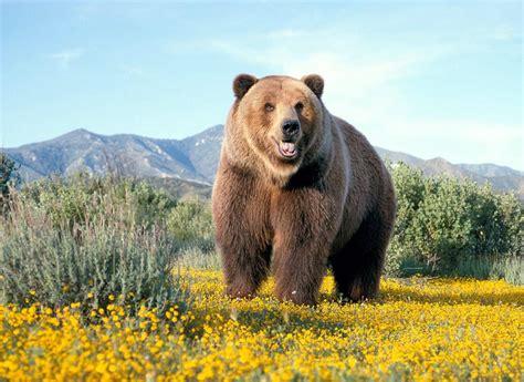 imagenes de animales terrestres image gallery osos