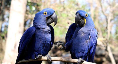 imagenes de animales y plantas de brasil brasil tiene m 225 s de 3 000 especies de fauna y flora en