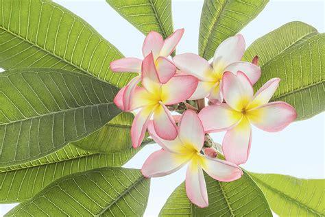 i colori dei fiori i colori dei fiori by giuseppe guadagno juzaphoto