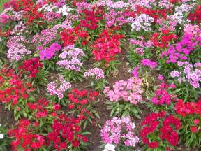 file flower garden unknown plant 1 jpg