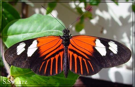 Gw 244h Butterfly butterfly22
