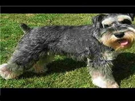 finding breeding dogs  age   breed