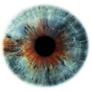 iris eye color the electronic eye the atlantic