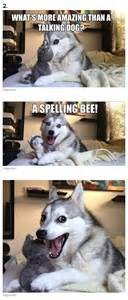 Pun Husky Meme - 1000 ideas about bad pun dog on pinterest funny riddles
