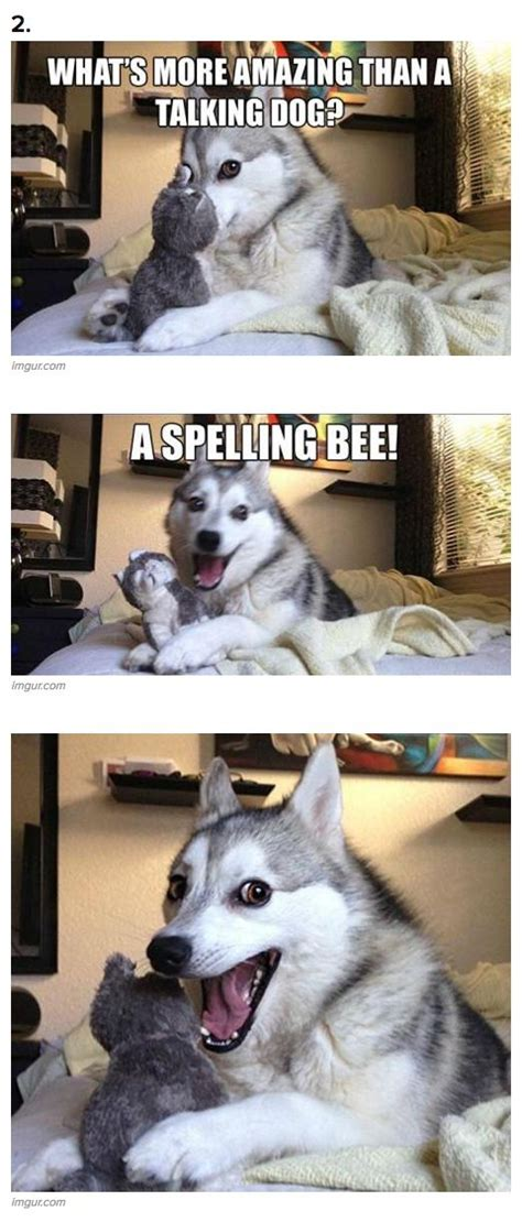 Dog Pun Meme - 1000 ideas about bad pun dog on pinterest funny riddles