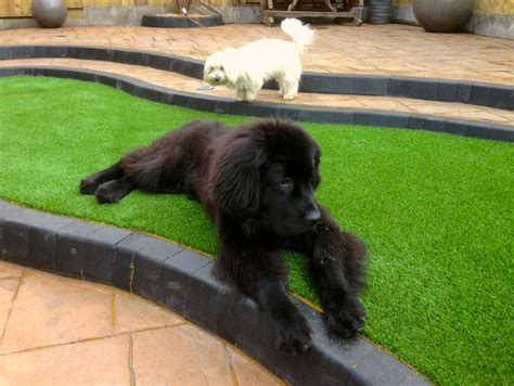 is grass for dogs artificial grass for dogs with lawns
