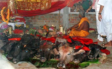 kali worship human sacrifice ajit vadakayil all animal sacrifices in hindu temples